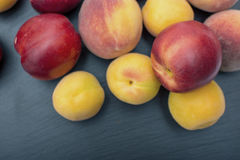Ripe apricot and nectarine on black background of slate or stone Royalty Free Stock Photos