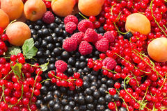 Ripe Apricot, Raspberry, Red and Black Currant Royalty Free Stock Image