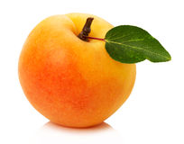Ripe apricot on the white background Stock Photography