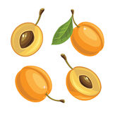 Ripe apricot  on white background. Ripe apricot and apricot slices on a white background Royalty Free Stock Photo