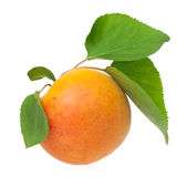 Ripe apricot Royalty Free Stock Photos