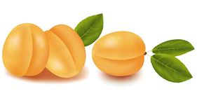 Ripe apricots. Royalty Free Stock Image
