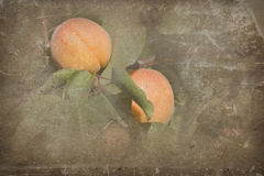 Ripe apricots Royalty Free Stock Photos