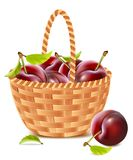 Ripe apricots in the basket. vector illustration