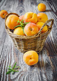 Ripe apricots in a basket Stock Photography