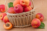Ripe apricots in basket Royalty Free Stock Photos