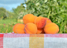 Ripe apricots on green background. Royalty Free Stock Photos