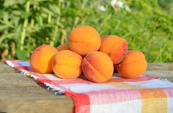 Ripe apricots on green background. Stock Photo