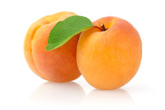 Ripe Apricots with Leaf Royalty Free Stock Photo