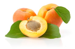 Ripe Apricots with Leaves. Apricots with Leaves Isolated on White Background Royalty Free Stock Photo