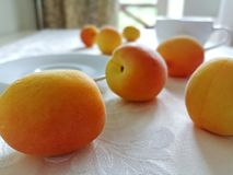 Ripe apricots scattered around the table. royalty free stock image