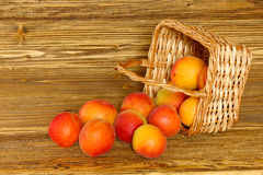 Ripe apricots scattered from a basket Royalty Free Stock Images