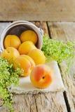 Ripe apricots Stock Image