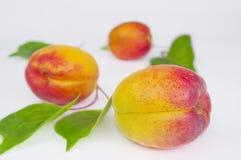 Ripe Apricots  on White Background Stock Image