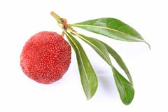 Ripe arbutus. On the white background Stock Photo