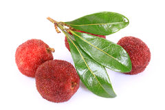 Ripe arbutus. On the white background Royalty Free Stock Photography