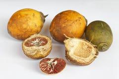 Ripe areca nuts Stock Images
