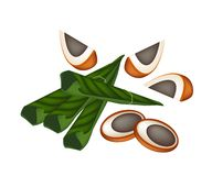 Ripe Areca Nuts and Betel Leaves on White Backgrou Stock Photo