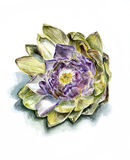 Ripe artichoke flower front. Isolated, watercolor Royalty Free Stock Photo
