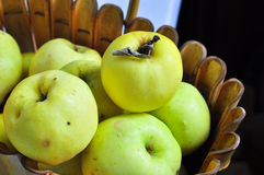 Ripe autumn apples in the basket. Stock Photo