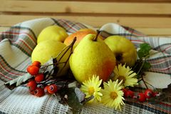 Ripe autumn pears and   berries Royalty Free Stock Photos