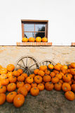 Ripe autumn pumpkins on the farm. As pleasing fall still life. Rural countryside scene Royalty Free Stock Images