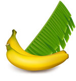 Ripe bananas. Vector. Ripe yellow bananas with leaves vector / mesh Stock Image