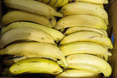 Ripe bananas at the Farmer`s market. Packed bananas in cardboard box seen from above stock photos