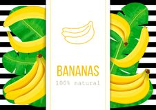 Ripe Bananas, tropical palm leaves with text 100 percent natural. Ripe Bananas and palm leaves with text 100 percent natural. Vertical label. black stripes stock illustration
