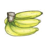 Ripe bananas on a white hand drawing  Stock Image