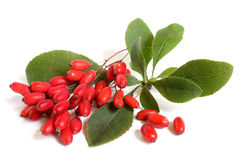 Ripe barberries on branch with green leaves stock images