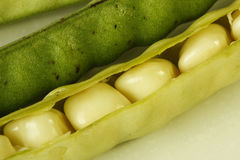 Ripe beans in its pod. Close-up of ripe beans in its pod royalty free stock photo