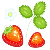 Ripe beautiful red berry. Juicy tasty, sweet strawberry, a source of useful vitamins and trace elements. Vector illustration royalty free illustration