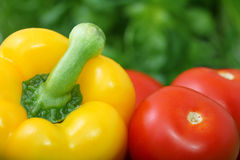 Ripe bell pepper and tomatoes. Closeup of ripe red tomatoes and yellow bell pepper with green background Stock Photos