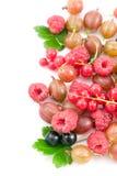 Ripe berries Stock Photo