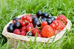 Ripe berries in a basket Stock Photography