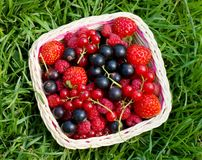 Ripe berries in a basket Stock Image