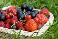 Ripe berries in a basket Royalty Free Stock Photos