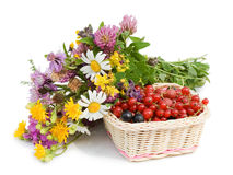 Ripe berries in a basket and flowers Royalty Free Stock Photo
