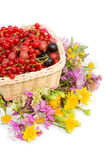 Ripe berries in a basket isolated Royalty Free Stock Image