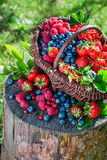 Ripe berries in basket Stock Image