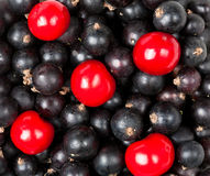 Ripe berries of cherry and black currant Royalty Free Stock Image
