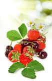 Ripe berries closeup Royalty Free Stock Photography