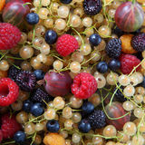 Ripe berries Royalty Free Stock Photos