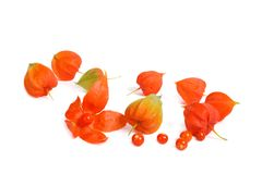 Ripe berries Physalis heap isolated Stock Images