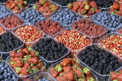 Ripe berries in a plastic containe Stock Images
