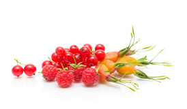 Ripe raspberry, red currant berries and rose hips on a white bac Stock Photography