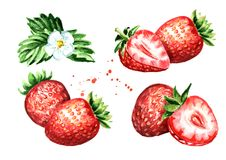 Ripe berries strawberry compositions set. Watercolor hand drawn illustration  isolated on white background. Ripe berries strawberry compositions set. Watercolor Stock Photos