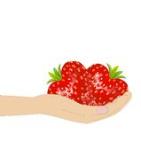 Ripe berries of strawberry in a hand on a white background Stock Photography