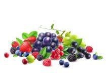 Ripe Berries Template Royalty Free Stock Image